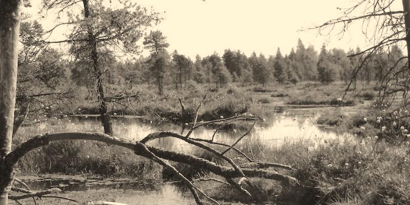 photo: Burns Bog