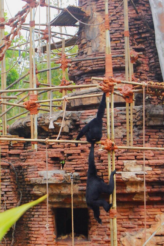 monkeys-animal-kingdom
