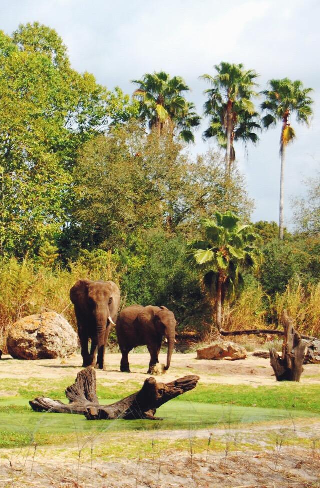 elephants-animal-kingdom