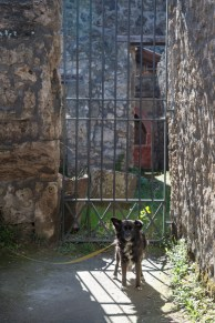 vandoggo-dog-travel-pompeii-1-3