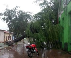 Ventos derrubam árvore e arrancam bomba de combustível em Pinheiro