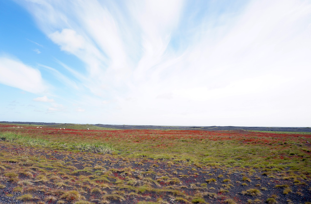 iceland_small_3363
