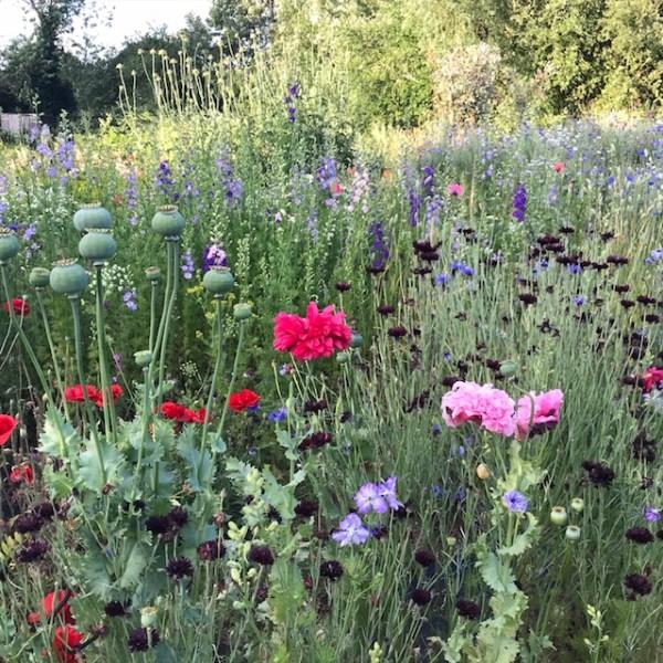 Midnight-Garden-Flower-Farm-1