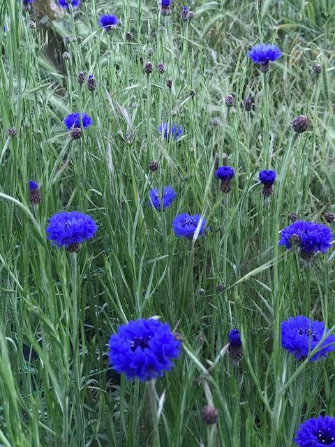Midnight-Garden-Flower-Farm-5
