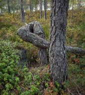 Vanerpaddel Viklund Glaskogen-108