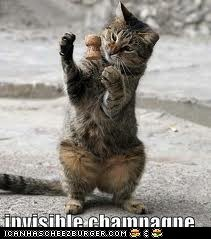 champcat