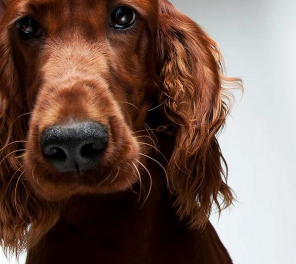 Dog-photo-12340