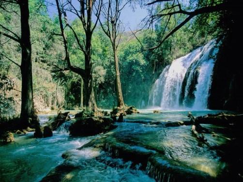 Selva Lacandona. National Geographic www.ngeneespanol.com