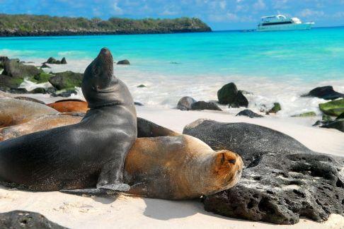 Islas Galápagos. En total son 13 islas de origen volcánico. Por su flora y fauna, en 1979 fueron declaradas Patrimonio Natural de la Humanidad. National Geographic www.ngeneespanol.com