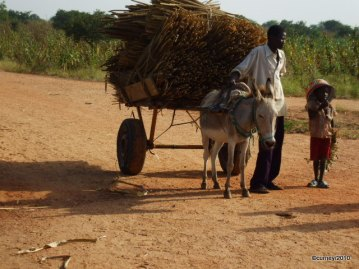 Bringing in the millet and arachide (groundnut), Niger