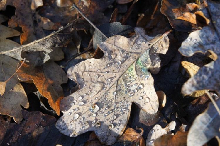 wimbledon-leaves