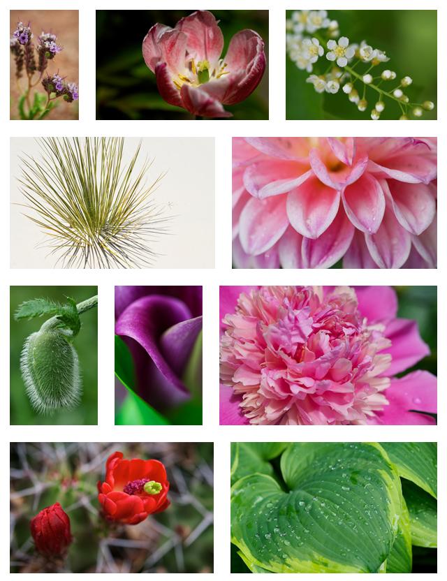 Botanical-Accreditation