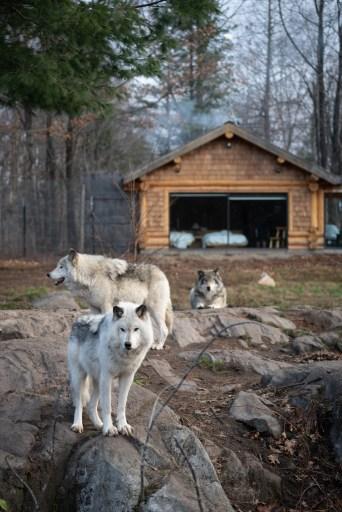 Wolf Cabin in Parc Omega, Quebec