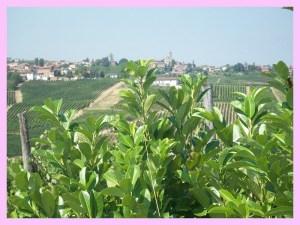 Il mio piccolo paese natio, Vicobarone (Piacenza)