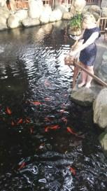 Pasqualle feeding the fish