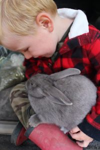 van H acres: The Satin Hutch Sprout, lilac Satin rabbit, Langley, Vancouver, British Columbia, BC, Canada