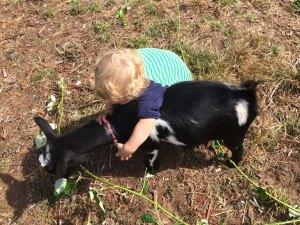 Child hugging Nigerian Dwarf goat