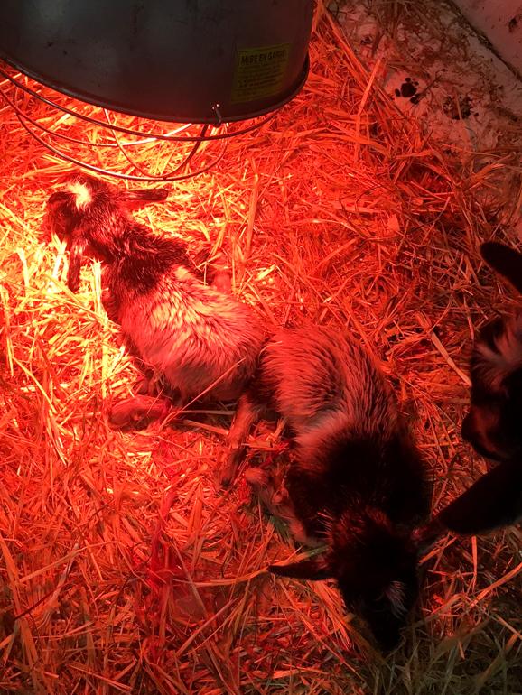 newborn kids warm under a heat lamp