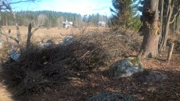 woodland-garden-sticks_33769035620_o