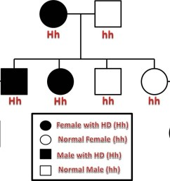 in this example pedigree the first generation resulted in a cross between a woman with huntington s disease and an unaffected male  [ 1100 x 716 Pixel ]