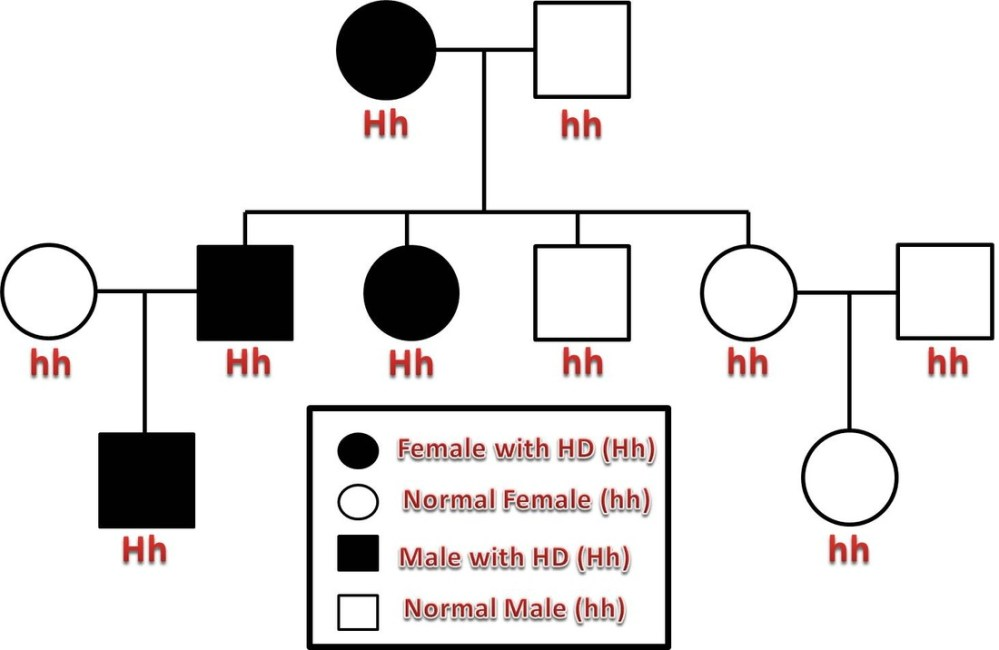 medium resolution of in this example pedigree the first generation resulted in a cross between a woman with huntington s disease and an unaffected male