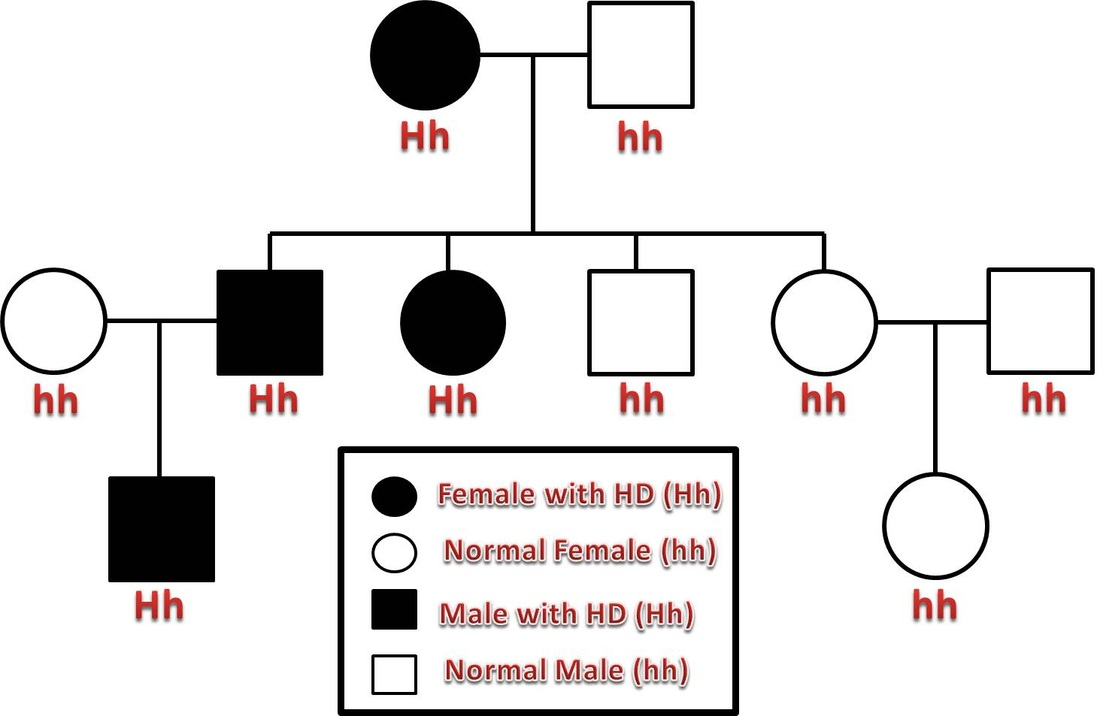 hight resolution of in this example pedigree the first generation resulted in a cross between a woman with huntington s disease and an unaffected male