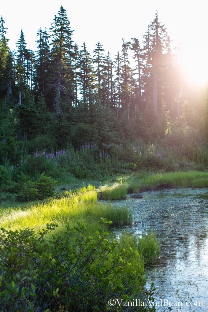 Heather Meadows - Mt. Baker WA | Vanilla And Bean