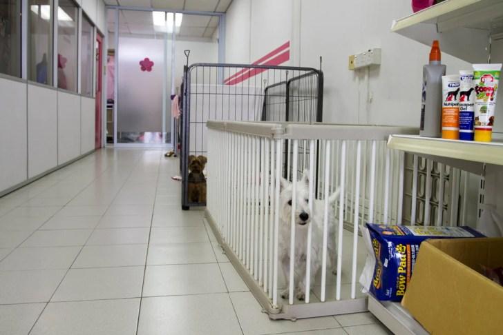 Holding Area - Pet Loft Singapore Grooming
