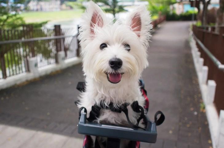 Buddyrider Dog Bicycle Seat |Vanillapup Picks