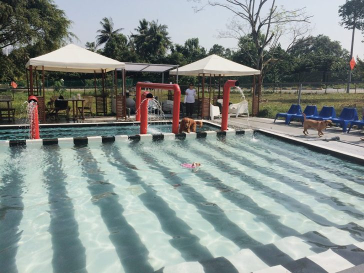 Sunny Heights Animal World Swimming Pool | Vanillapup