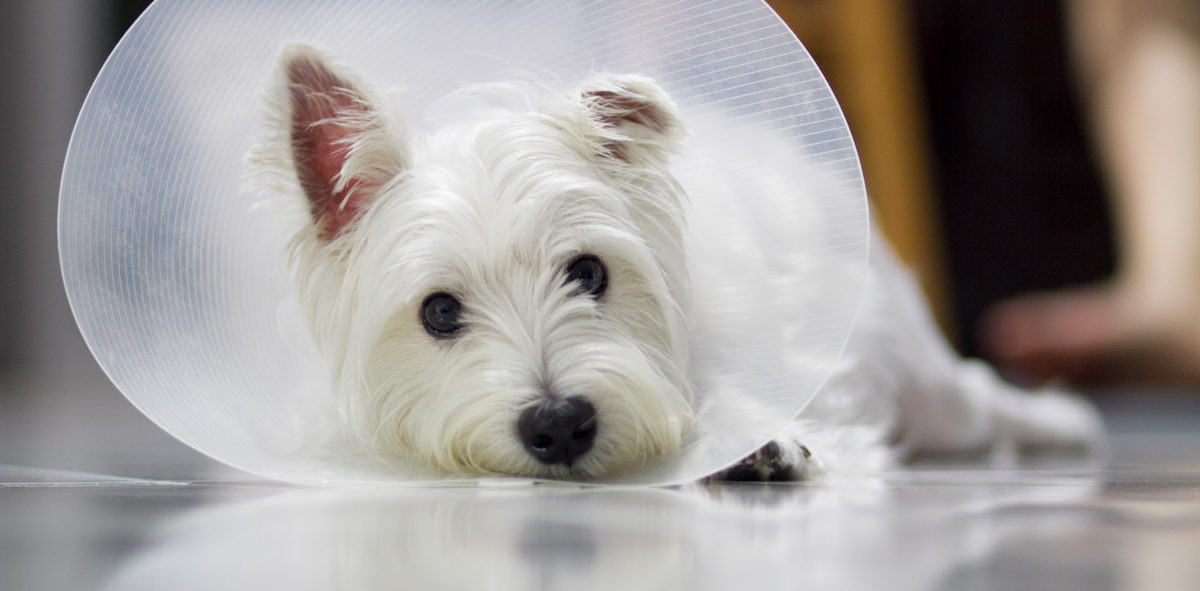 Happy Tails Pet Insurance and Liberty PetCare Comparison