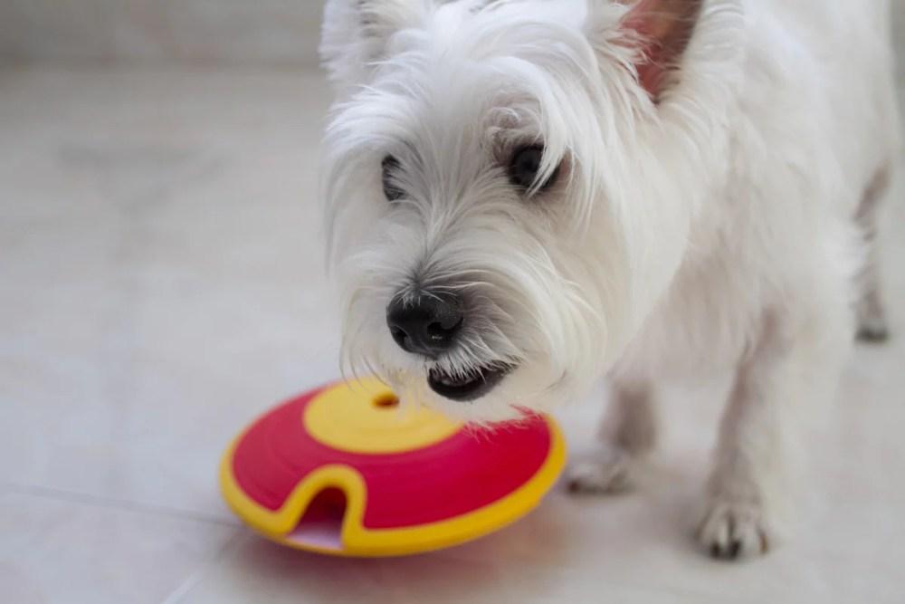 Nina Ottosson Dog Treat Maze Toy Review   Vanillapup