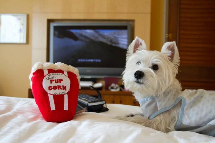 Dog-friendly Staycation at Conrad Hotel Bed | Vanillapup