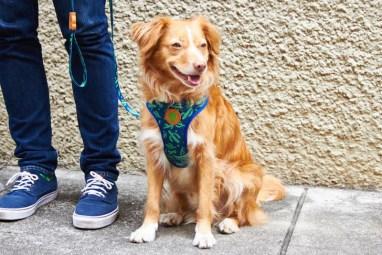 Zee.Dog Guacamole Harness