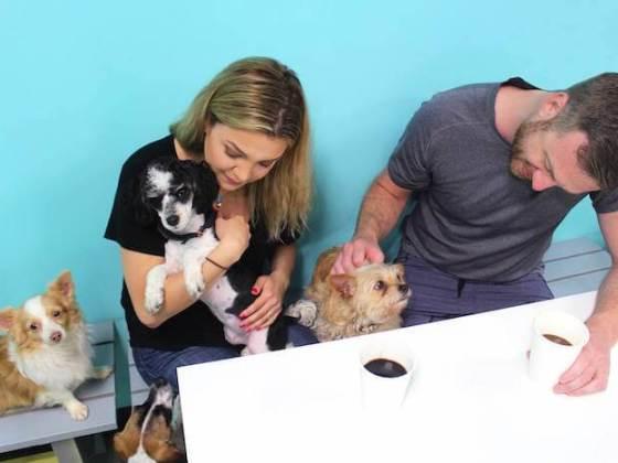 The Dog Cafe LA | Vanillapup