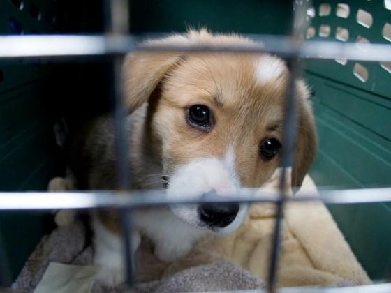 Puppy Crate Training | Vanillapup