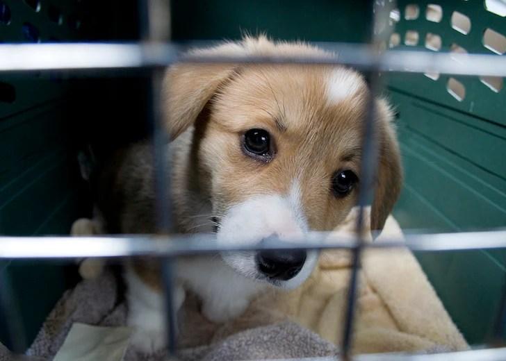 Puppy Crate Training   Vanillapup