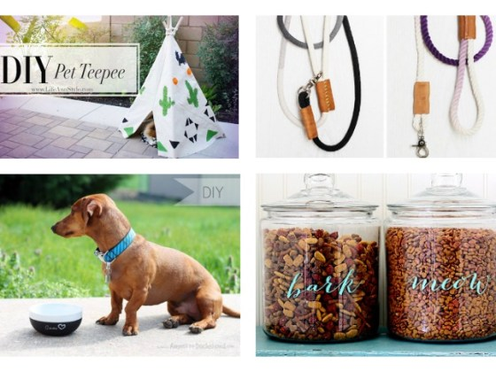 DIY Dog Projects   Vanillapup