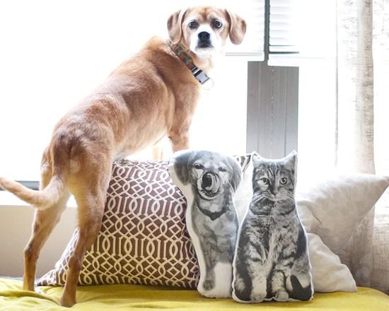 DIY Pet Portrait Pillows | Vanillapup