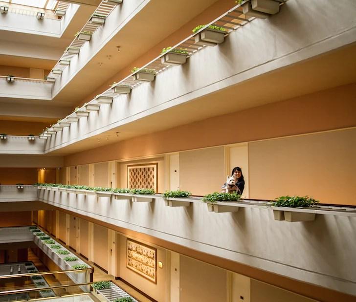 Pet-friendly Regent Singapore Hotel Staycation Interior | Vanillapup