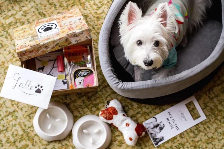 Pet-friendly Regent Singapore Hotel Staycation Puppy Pack | Vanillapup