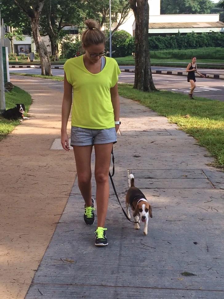 Polite Leash Walking Example 1 | Vanillapup