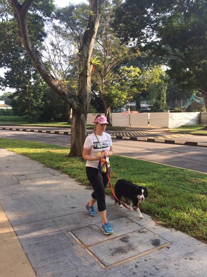 Polite Leash Walking Example 2 | Vanillapup