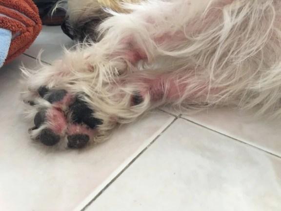 Latte's Red Paws | Vanillapup