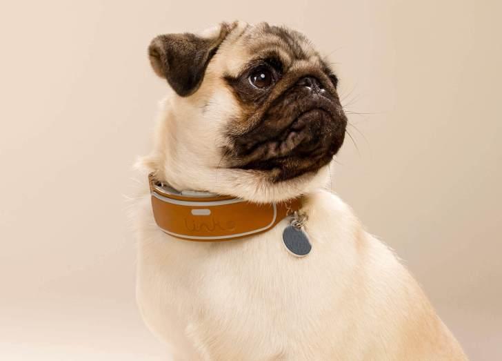 Link AKC Smart Collar | Vanillapup