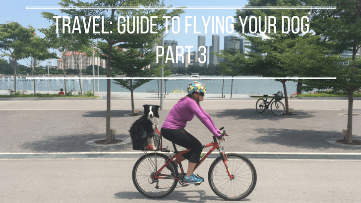 Pet Travel: The Nitty-gritty Guide to Flying With Your Dog [Part 3]