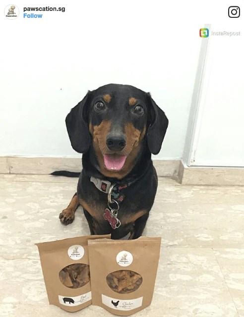 Pawscation Dog Treats   Vanillapup