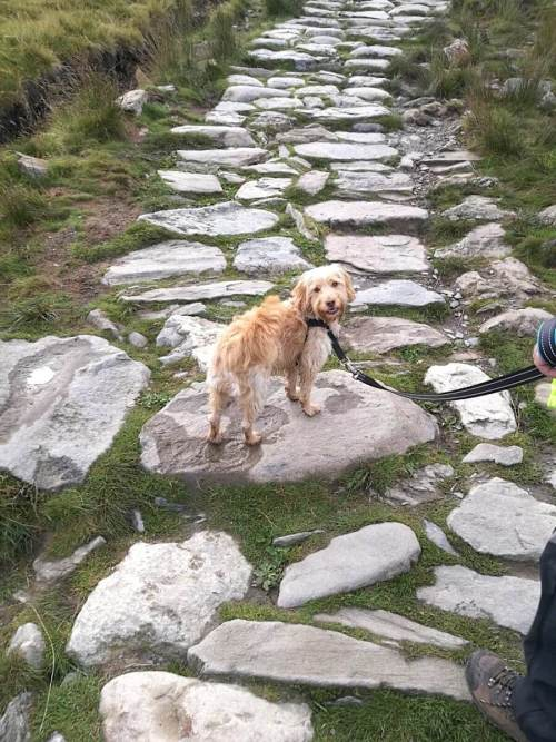 Hiking With Dogs - Luna on Snowdon Trail | Vanillapup