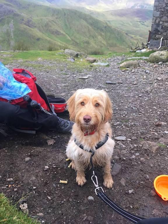 Hiking With Dogs - Luna on Snowdon | Vanillapup