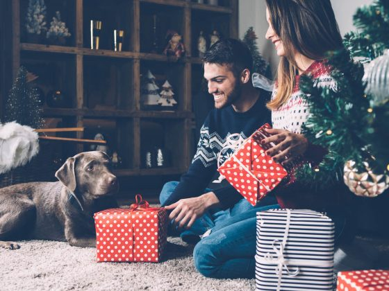 Ways to Celebrate Christmas With Your Dog | Vanillapup